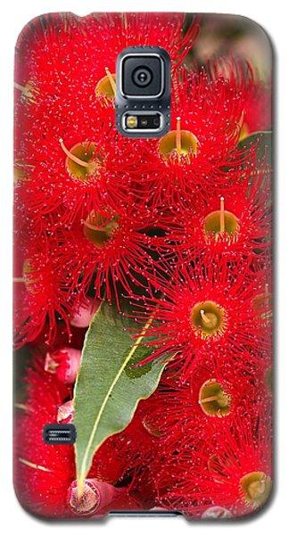 Australian Red Eucalyptus Flowers Galaxy S5 Case