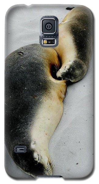Australian Sea Lions Galaxy S5 Case