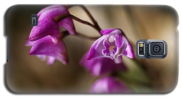 Australia's Native Orchid Small Dendrobium Galaxy S5 Case