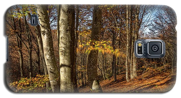 Galaxy S5 Case featuring the photograph Autumn Afternoon In Forest by Davorin Mance