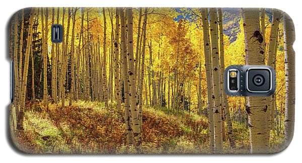Autumn Aspen Forest Aspen Colorado Panorama Galaxy S5 Case