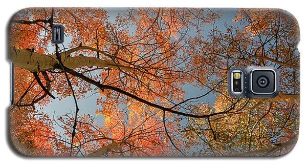 Autumn Aspens In The Sky Galaxy S5 Case