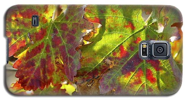 Autumn At Lachish Vineyards 2 Galaxy S5 Case by Dubi Roman