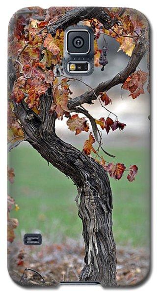 Autumn At Lachish Vineyards 3 Galaxy S5 Case by Dubi Roman