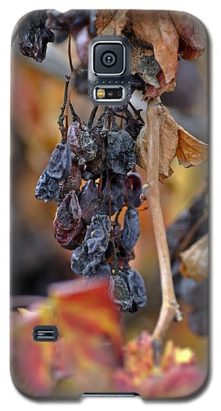 Galaxy S5 Case featuring the photograph Autumn At Lachish Vineyards 4 by Dubi Roman