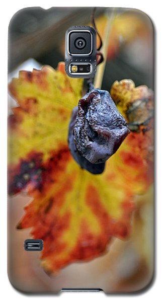 Galaxy S5 Case featuring the photograph Autumn At Lachish Vineyards 5 by Dubi Roman