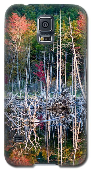 Autumn At Moosehead Bog Galaxy S5 Case