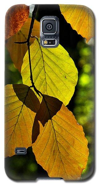 Autumn Beech Tree Leaves Galaxy S5 Case