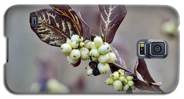 Autumn Berries And Foliage Galaxy S5 Case