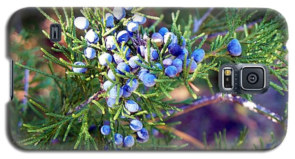 Galaxy S5 Case featuring the photograph Autumn Berries by Betty Northcutt