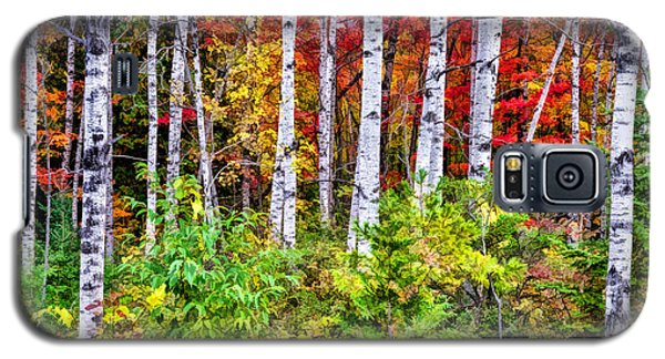 Galaxy S5 Case featuring the painting Autumn Birches by Christopher Arndt