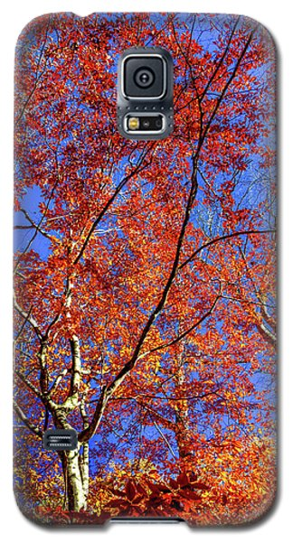 Autumn Blaze Galaxy S5 Case by Karen Wiles