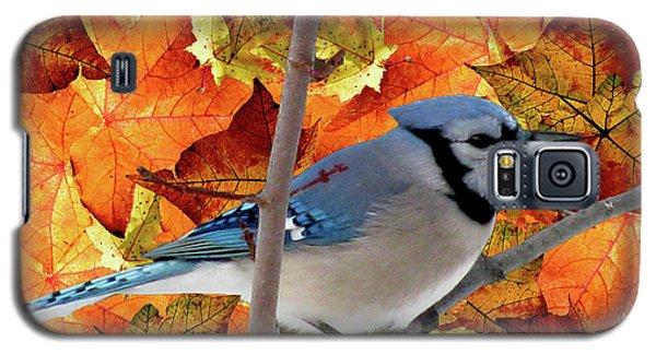 Autumn Blue Jay Galaxy S5 Case by Debra     Vatalaro