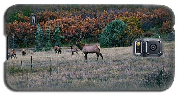 Autumn Bull Elk Galaxy S5 Case