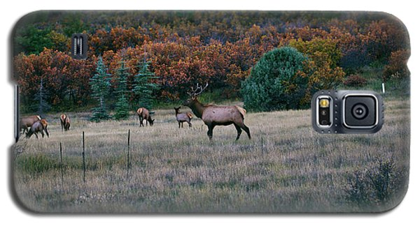 Autumn Bull Elk Galaxy S5 Case