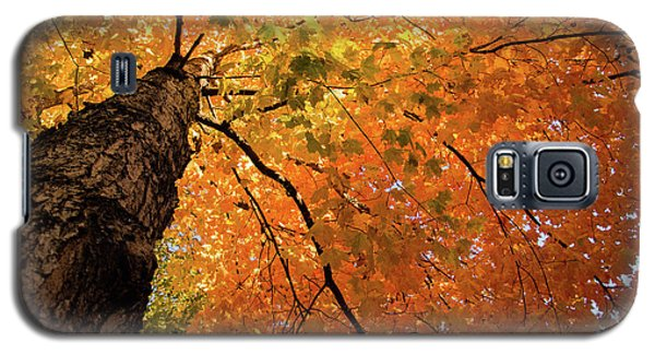 Autumn Canopy In Maine Galaxy S5 Case