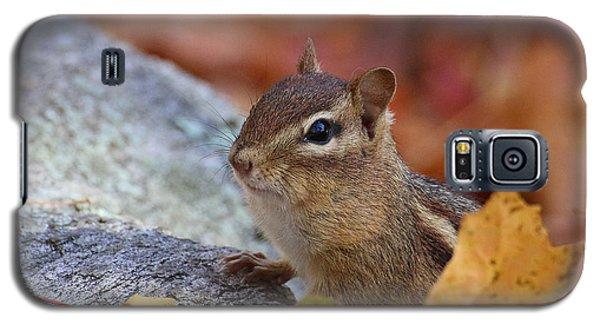 Autumn Chipmunk Galaxy S5 Case