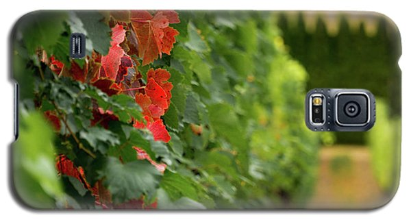 Autumn Comes To The Vineyard Galaxy S5 Case
