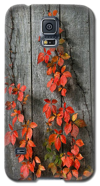 Autumn Creepers Galaxy S5 Case