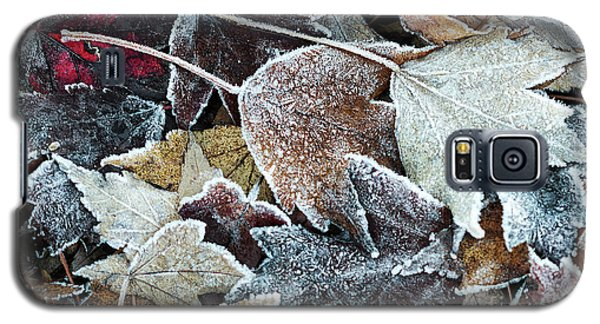 Autumn Ends, Winter Begins 1 Galaxy S5 Case