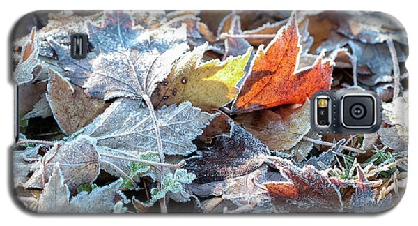 Galaxy S5 Case featuring the photograph Autumn Ends, Winter Begins 3 by Linda Lees
