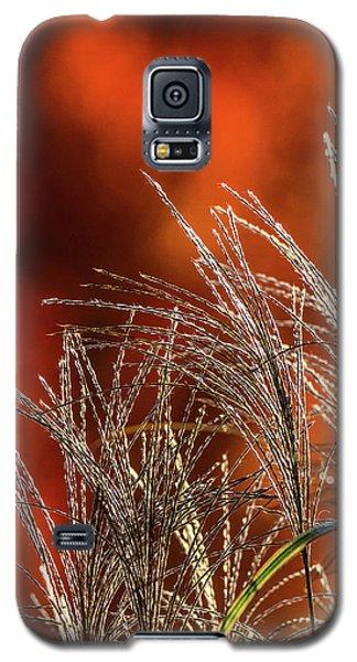 Autumn Fire - 1 Galaxy S5 Case