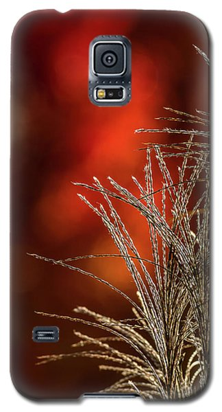 Autumn Fire - 2 Galaxy S5 Case