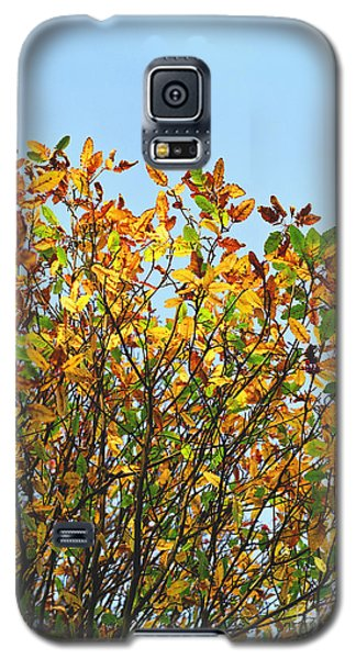 Galaxy S5 Case featuring the photograph Autumn Flames - Original by Rebecca Harman