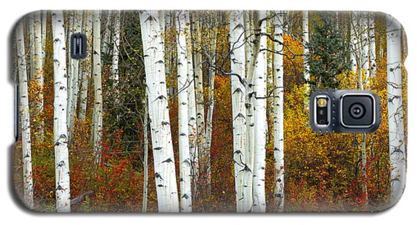 Autumn Forest Beauty Galaxy S5 Case
