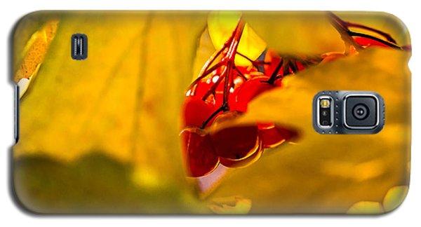 Galaxy S5 Case featuring the photograph Autumn Fruits - Viburnum Berries by Alexander Senin