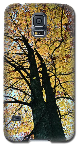 Autumn Glory Galaxy S5 Case