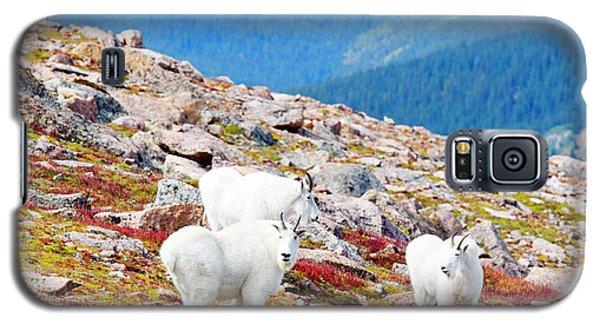 Autumn Goats On Mount Bierstadt Galaxy S5 Case