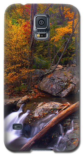 Galaxy S5 Case featuring the photograph Autumn Gold by Everett Houser