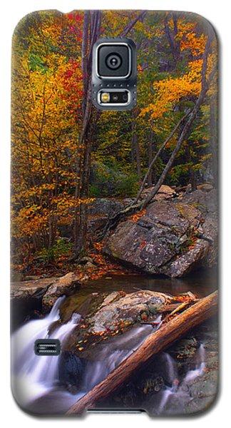 Autumn Gold Galaxy S5 Case by Everett Houser