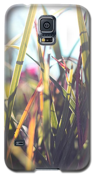 Autumn Grasses Galaxy S5 Case