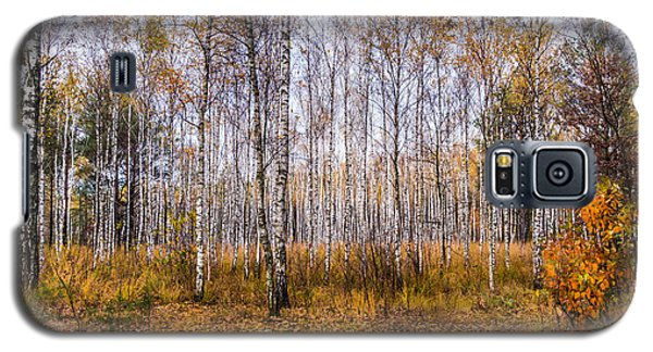 Autumn In The Birch Grove Galaxy S5 Case