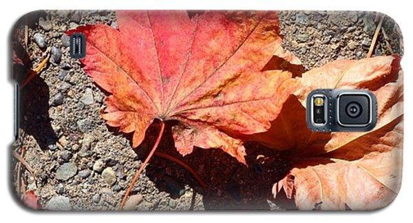 Orange Galaxy S5 Case - Autumn Is Here by Blenda Studio