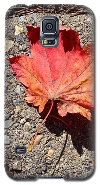 Orange Galaxy S5 Case - Autumn Is Here by Blenda Studio