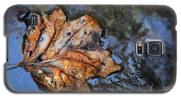 Galaxy S5 Case featuring the photograph Autumn Leaf by Debra and Dave Vanderlaan