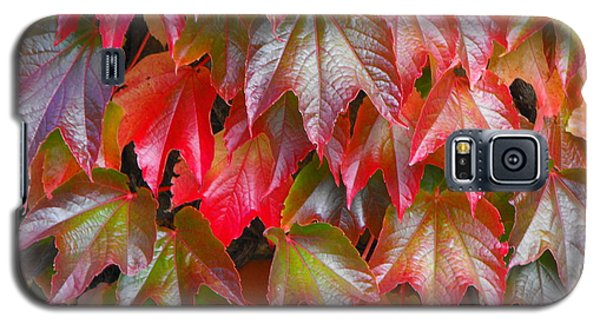Autumn Leaves 01 Galaxy S5 Case