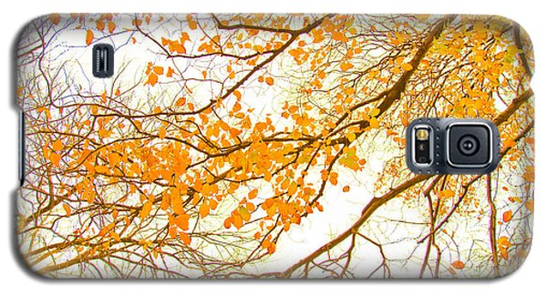 Featured Images Galaxy S5 Case - Autumn Leaves by Az Jackson