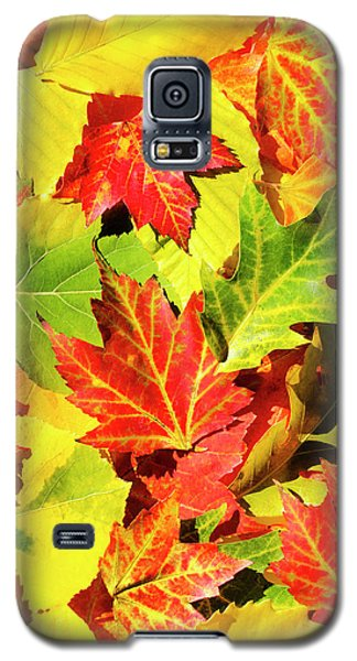 Galaxy S5 Case featuring the photograph Autumn Leaves by Christina Rollo