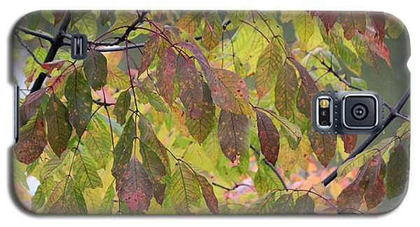 Galaxy S5 Case featuring the photograph Autumn Leaves by Doris Potter