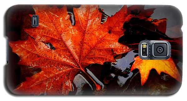 Autumn Leaves In Tumut Galaxy S5 Case