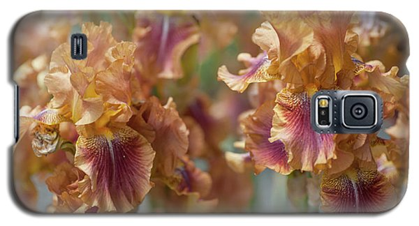 Autumn Leaves Irises In Garden Galaxy S5 Case