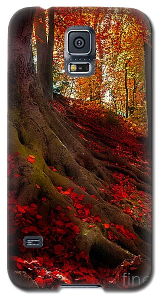 Autumn Light Galaxy S5 Case