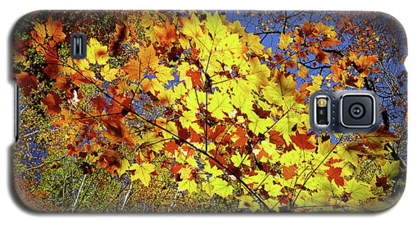 Autumn Light Galaxy S5 Case by Tatsuya Atarashi