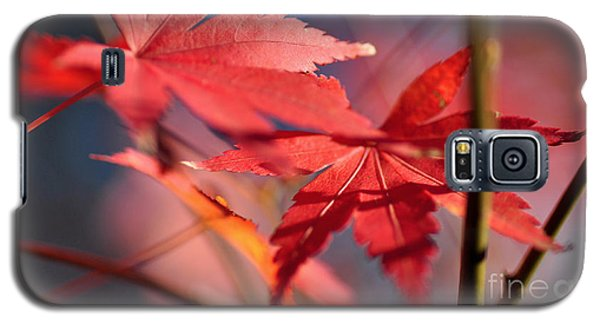 Autumn Maple Galaxy S5 Case