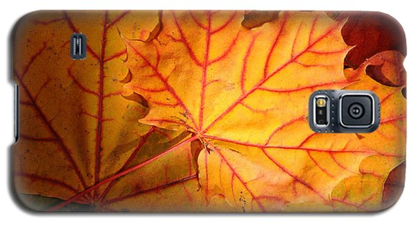 Autumn Maple Leaves Galaxy S5 Case