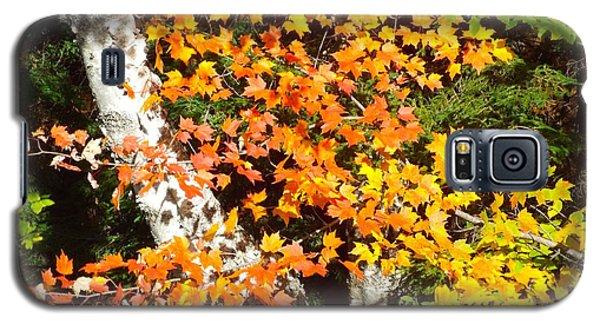 Autumn Maple Galaxy S5 Case